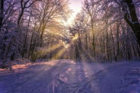 обои для рабочего стола 2000x1333 природа, дороги, солнце, зима, снег, лучи, aleksei, malygin, фото, деревья