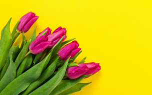 цветы, yellow, букет, tulips, purple, spring, flowers, fresh, colorful, тюльпаны
