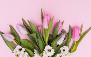 tender, spring, fresh, pink, tulips, тюльпаны, flowers, цветы, розовые