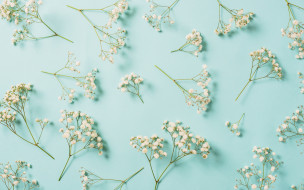 flowers, spring, фон, white, белые, floral, цветы