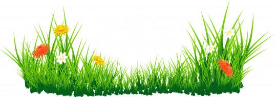 векторная графика, цветы , flowers, цветы, фон, трава