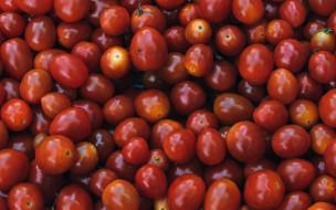 томаты, много, урожай
