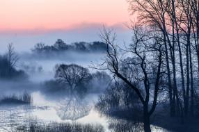 природа, реки, озера, деревья, ветки, туман