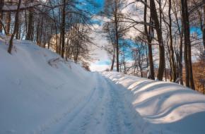 природа, дороги, деревья, снег, зима, дорога