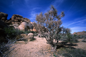 природа, пустыни, простор
