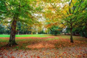 природа, парк, простор