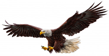 work of art, drawing, bald eagle, real