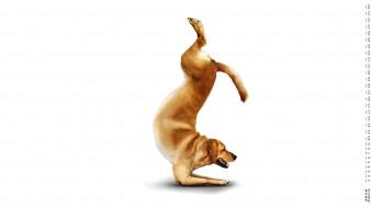 календари, компьютерный дизайн, упражнение, собака