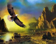 полет, орел