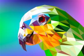 векторная графика, животные , animals, попугай