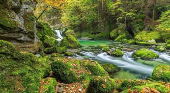 камни, река, мох, лес, листья, деревья, осень