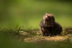 baby animal, лисица, малыш, cub, wildlife, природа