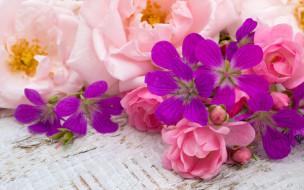 bud, wood, розовые, бутоны, pink, flowers, цветы