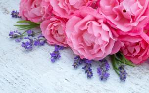 pink, пионы, lavender, розовые, лаванда, peonies, flowers, цветы
