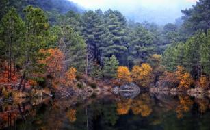 камень, деревья, лес, осень, озеро