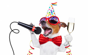 юмор и приколы, собака, party