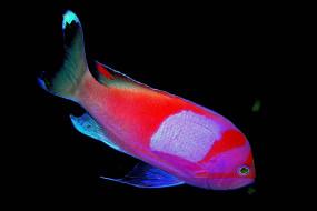 яркая, рыба