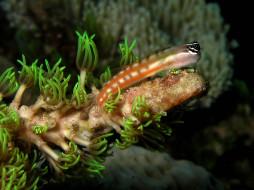 рыбка, водоросли, кораллы