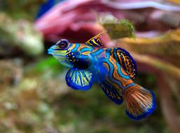 рыбка, синяя, яркая, вода