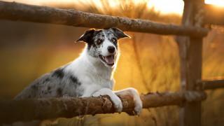 животные, собаки, собака, изгородь, трава