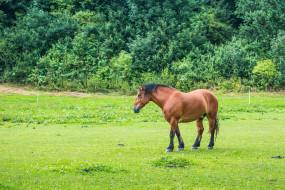животные, лошади, растения