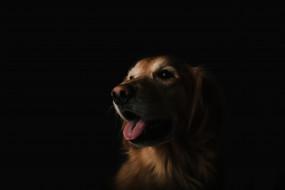 животные, собаки, взгляд