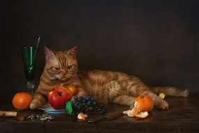 котейка, бокал, рыжий кот, мандарины, виноград, яблоки