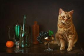 виноград, котейка, бокал, мандарин, рыжий кот, бутылки