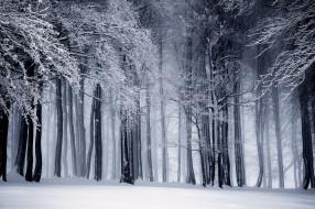 деревья, зима, природа, снег, лес