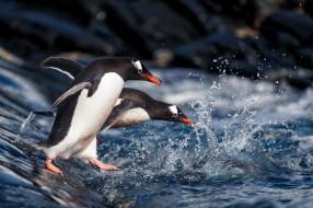 вода, брызги, пингвины