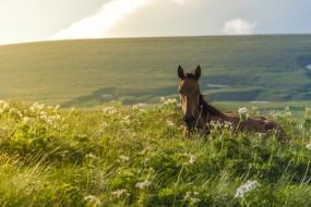трава, луг, жеребенок, конь