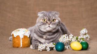 пасха, весна, кот