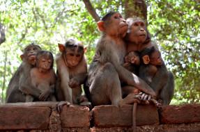 семья, природа, обезьяны