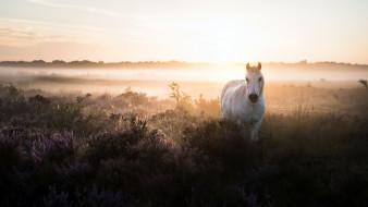 туман, утро, конь, поле