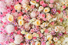 цветы, разные вместе, бутоны, розовые, roses, pink, розы, фон, bud, flowers