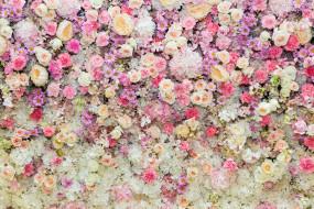 фон, розы, pink, roses, розовые, бутоны, bud, flowers, цветы