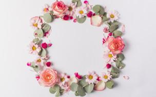 tender, petals, розы, pink, ромашки, лепестки, fresh, розовые, rose, цветы, flowers, frame
