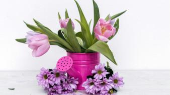 хризантемы, тюльпаны