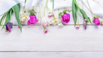 анемон, нарцисс, тюльпан