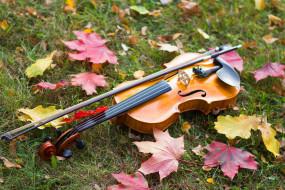 скрипка, листва