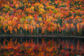 осень, озеро, деревья, лес