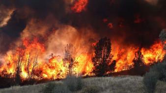 пожар, лесной, пламя, огонь