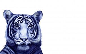 голова, зверь, графика, тигр