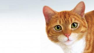 минимализм, кот