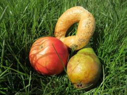 бублик, весна 2018, груша, яблоко