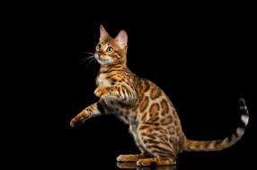 животные, коты, фон, кот