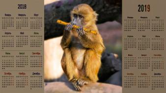 обезьяна, флейта