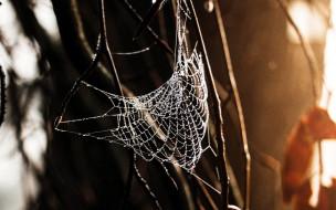 природа, макро, паутина