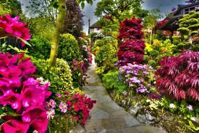 природа, парк, цветы, кусты
