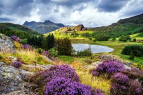 природа, пейзажи, вереск, горы, озеро